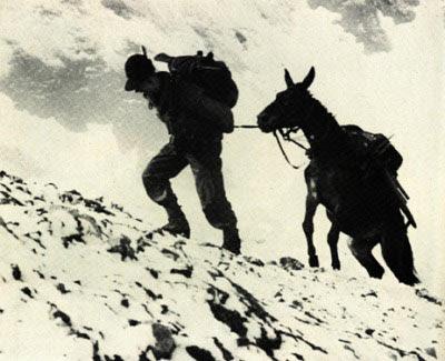 Udine: Alpini, muli e la storia di Luigi Venturini