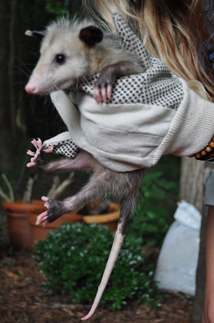 possum, diy design fanatic, diydesignfanatic.com