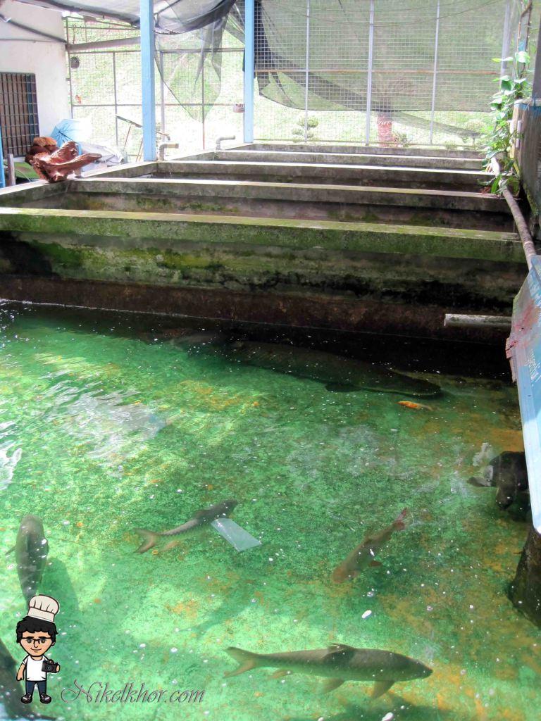 Nan Yang Fish Farm @ Bemban, Kulai, Johor | Nikel Khor ^ ^ PaPago kaki