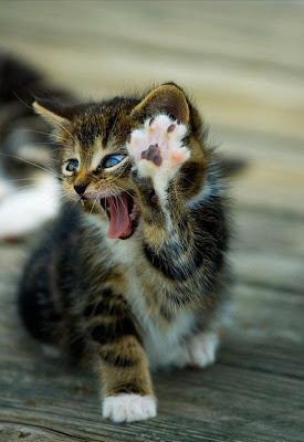 cat hi 5