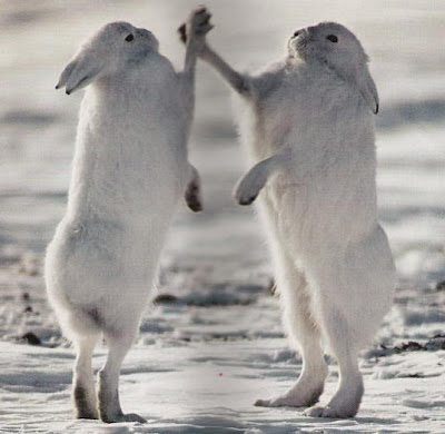 rabbit hi five