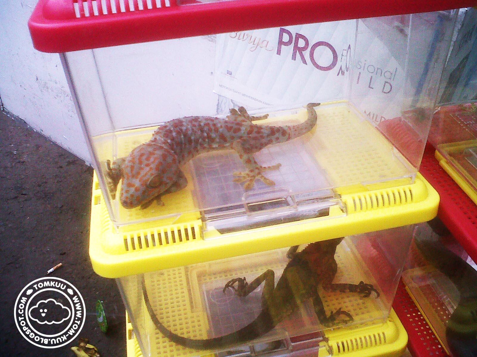 Tomkuu Pet Market Bip Bandung Indah Plaza