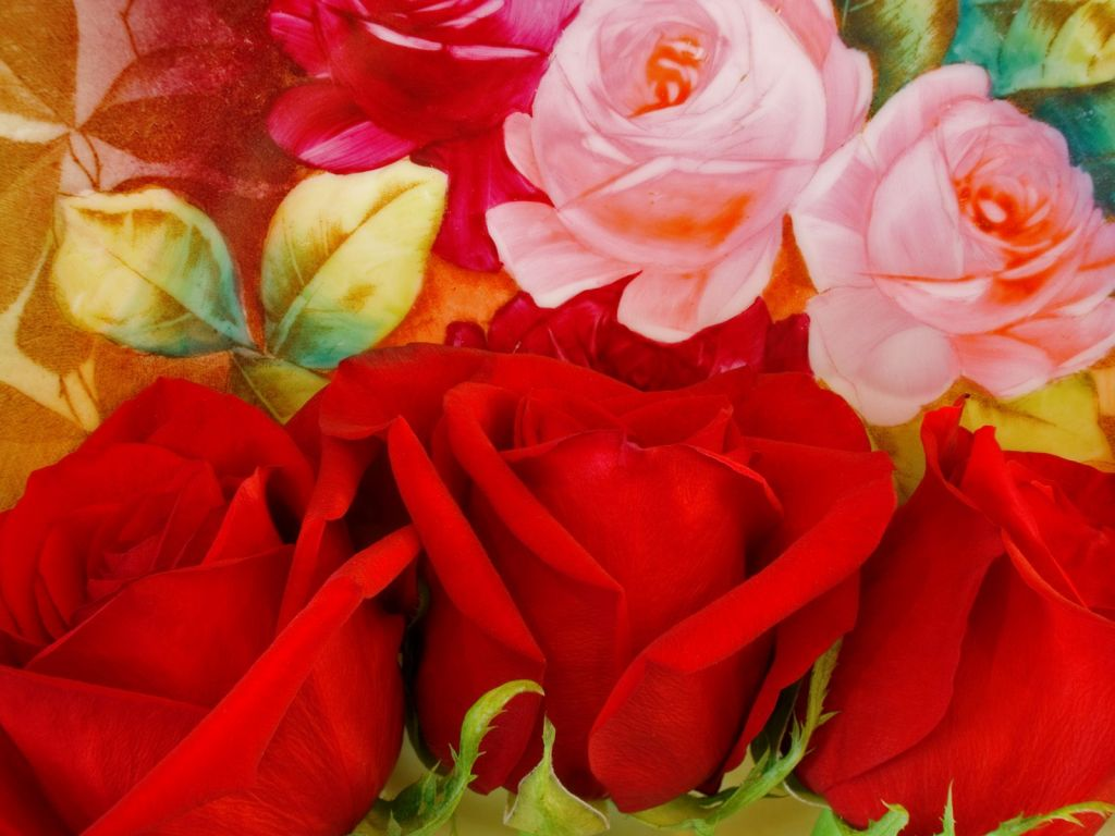 Descargar Imagenes De Rosas Rojas