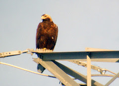 Spanish Eagle in El Pardo