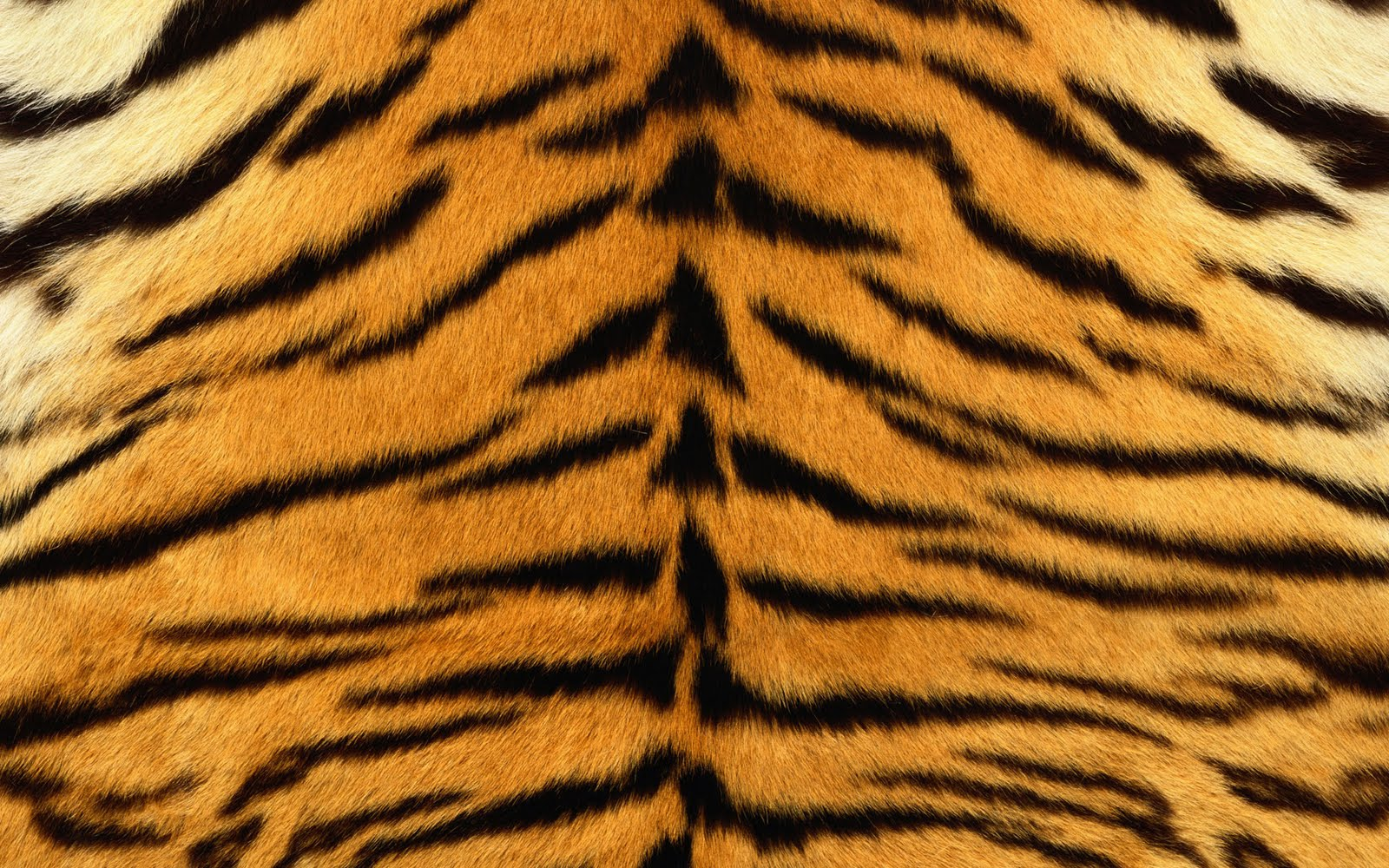 FMP- Design Context: Bacardi- Animal Skin - photo#26