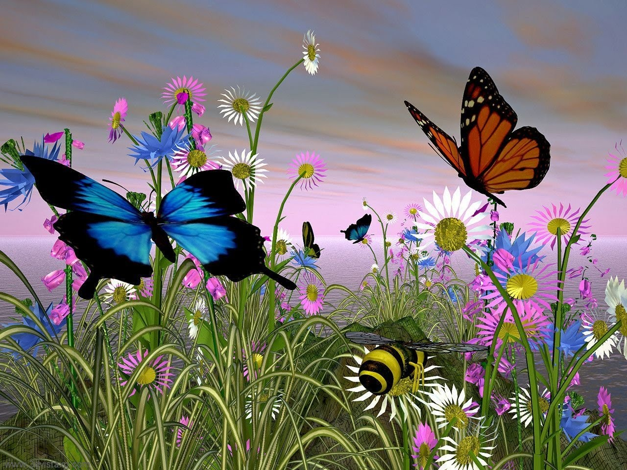 Caterpillar To Erfly