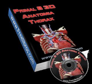 Primal 3D Torax y Abdomen