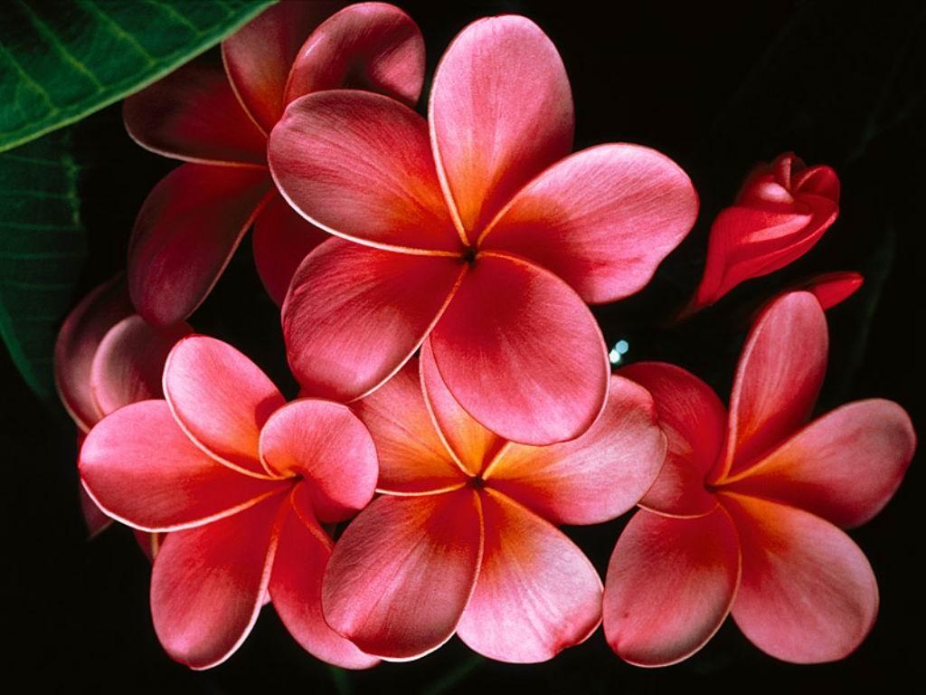 Info Lomba Terbaru Bunga Cantik
