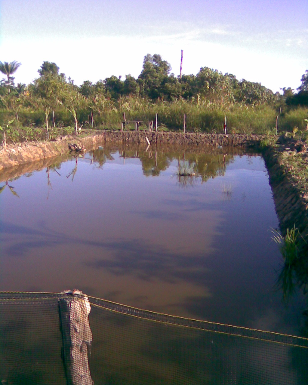 Gallery kelinjau: Foto Tambak Ikan, Budidaya Ikan Nila