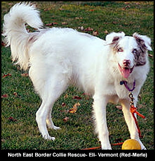 The Taming of a Country Boy: A Border Collie Named Blizzard