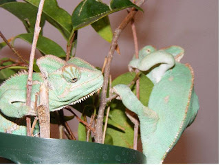 Chameleon World Health Section B Metabolic Bone Disorder