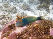 Great Seychelles Snorkeling Chalets ' Anse Forbans