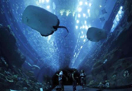 Dubai aquarium in the Dubai Mall