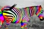 The Homosexual Zebra