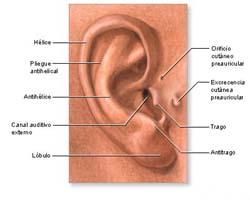 El Blog De La Educación Musical El Oído Humano Estructura