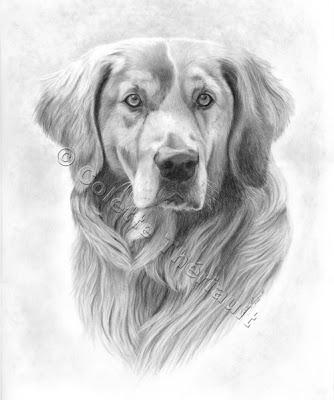 Cute Dieren Kleurplaten Artful Pencil Drawings By Pet Animal Artist Colette Theriault