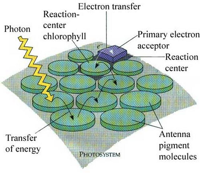 Biology 11 topic 10 photosynthesis biology 11 ccuart Image collections
