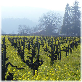 Mustard and Vines in Napa Valley