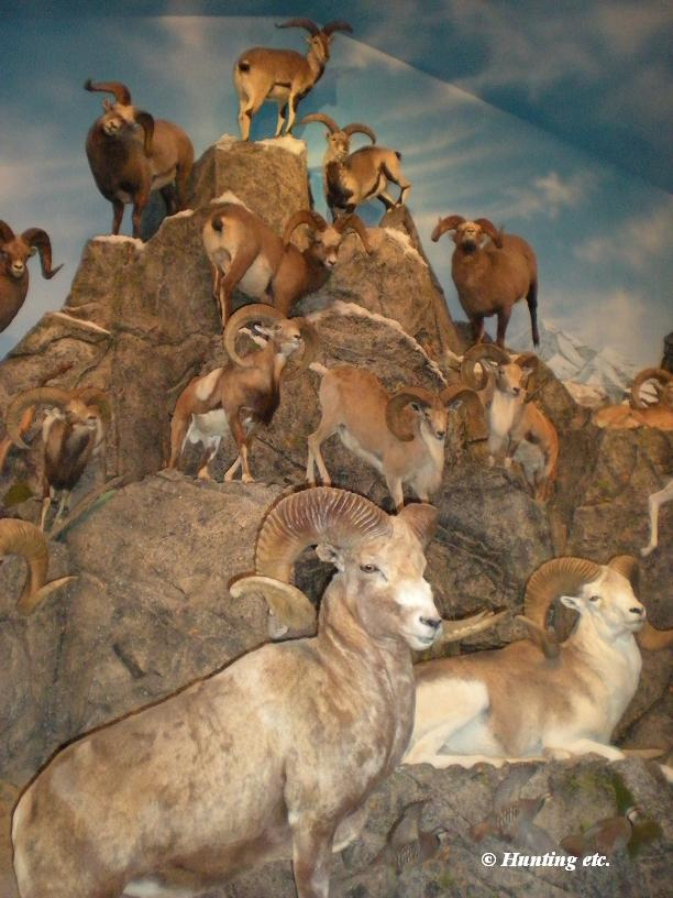 How To Include Taxidermy Into Trendy Home Decor: Hunting Etc.: How To Store Taxidermy