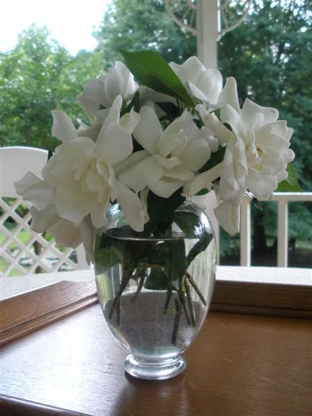 Mariette S Back To Basics May 22 Gardenia By Royal Albert And Blooming Gardenias In Baccarat Vase