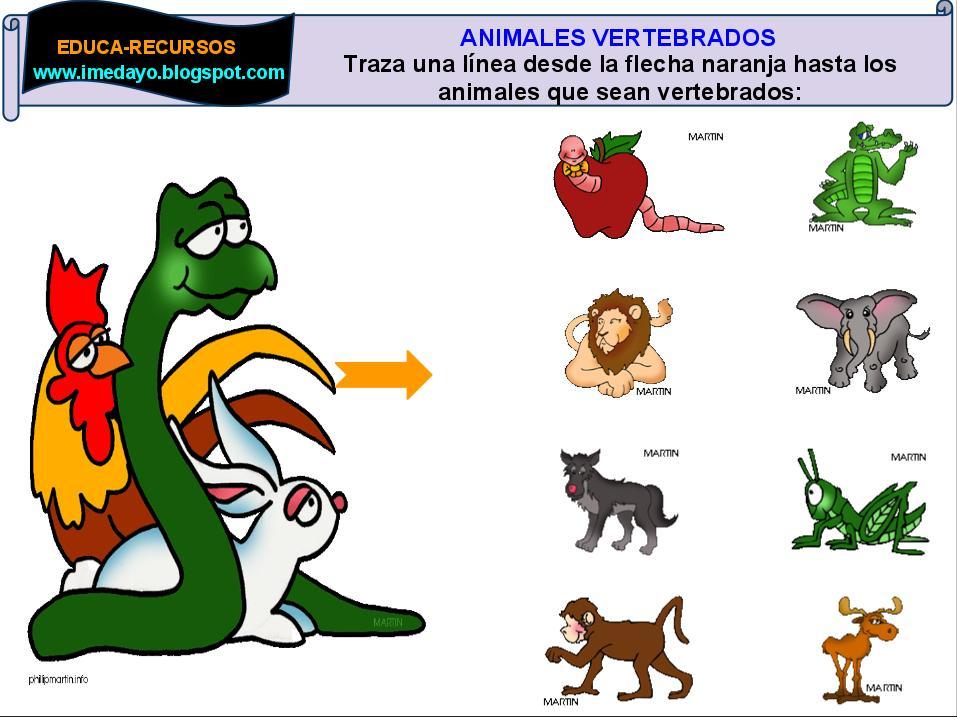 Dibujos Para Colorear De Animales Invertebrados Y Vertebrados: Fotos De Animales Vertebrados Para Imprimir