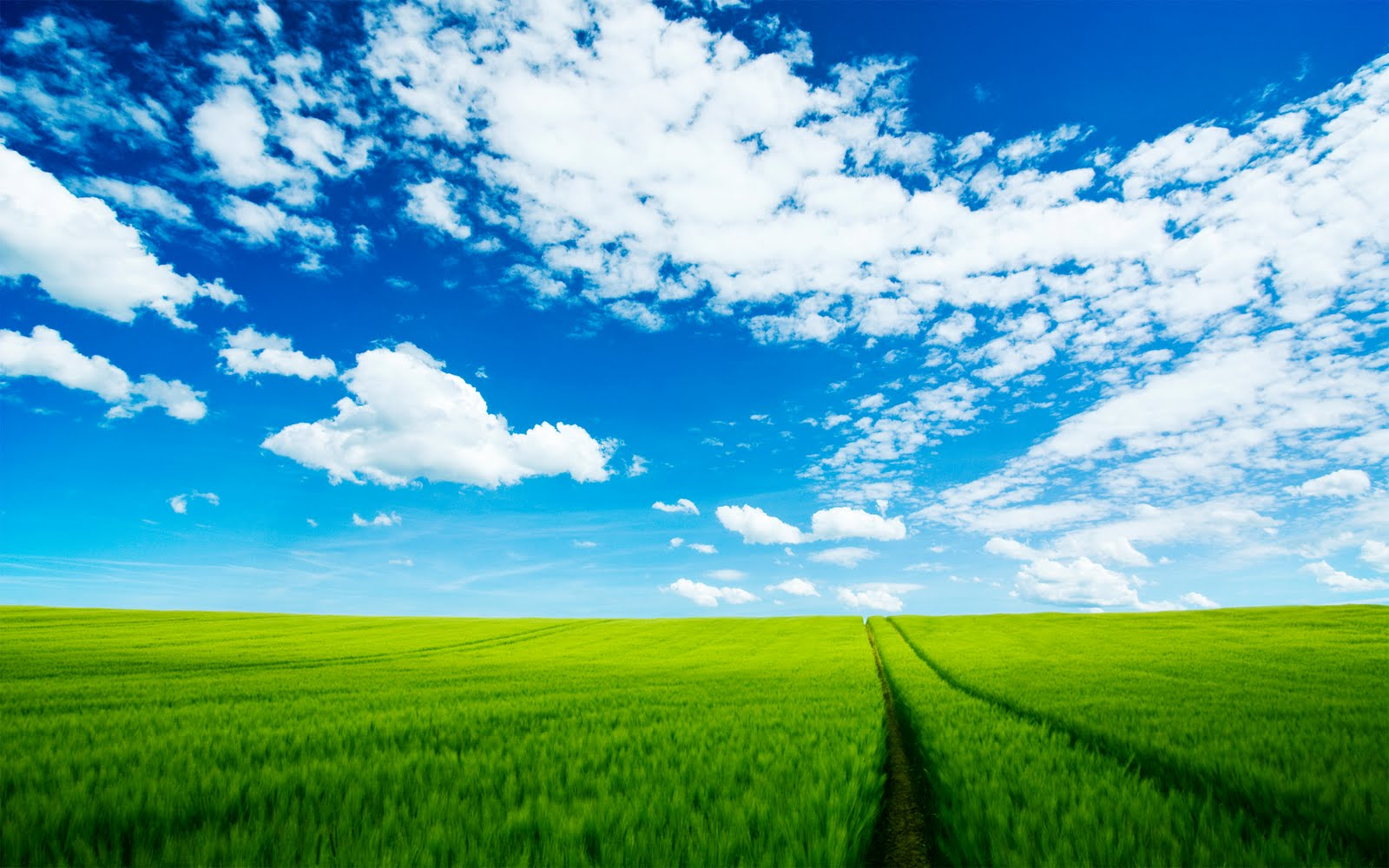 Wallpapers Box: Wheat Green Fields High Definition Wallpapers