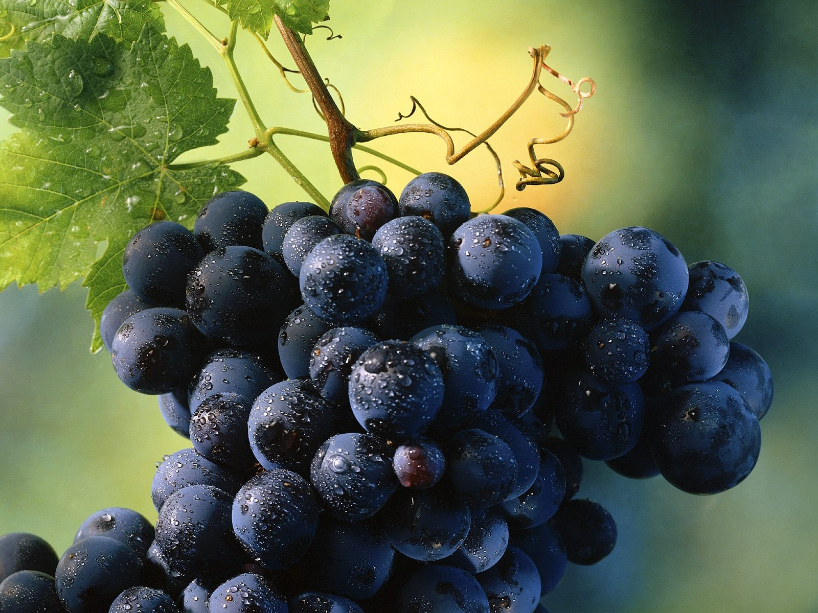 Fresh Tasty Grapes HD Wallpapers
