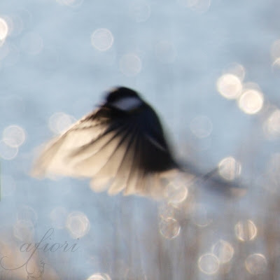 flying bird bokeh fine art photography pale blue sky winter Maria-Thérèse Andersson afiori