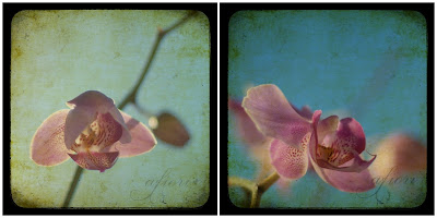 pink orchid ttv photograph turquoise blue sky background fine art photography Maria-Thérèse Andersson afiori spring springtime