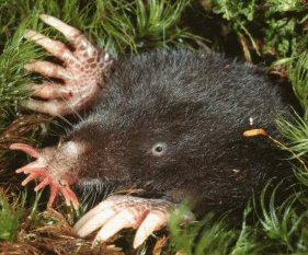 5 Spesies Hewan yang Ditakdirkan Buta Sejak Lahir ...