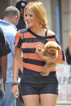 Shop Fairy Celebrity Pets Blake Lively And Her Dog Penny