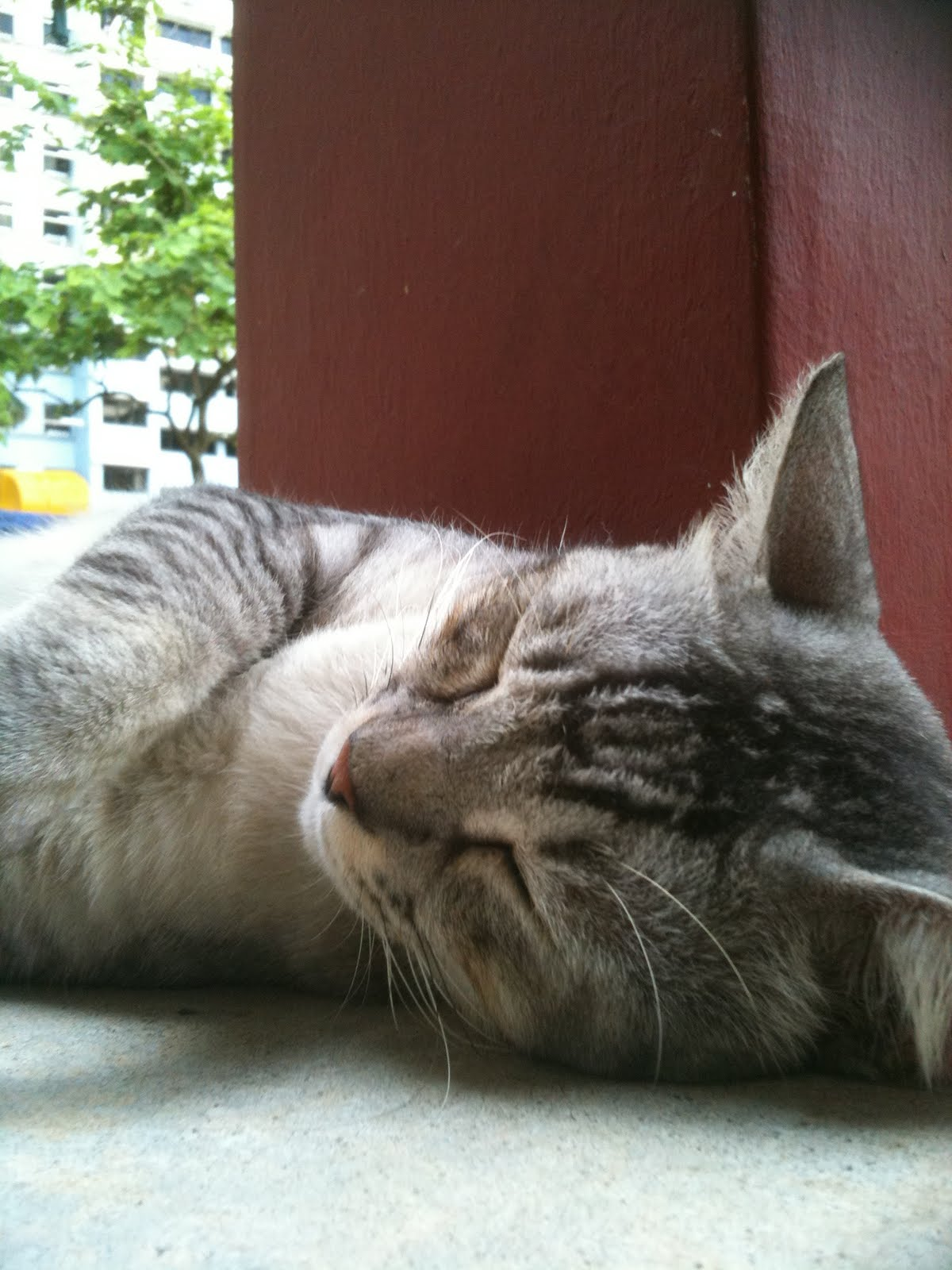 Singapore Community Cats: A good-looking community cat