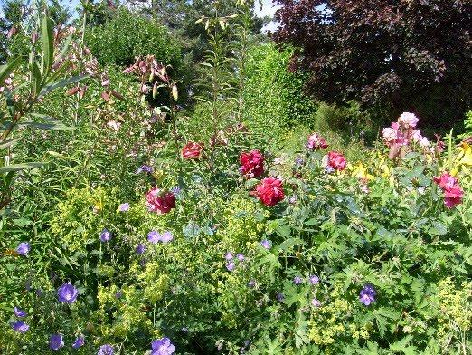 ma plan te jardin rosiers et vivaces les bonnes associations. Black Bedroom Furniture Sets. Home Design Ideas