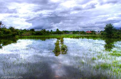 flood in the field wallpaper