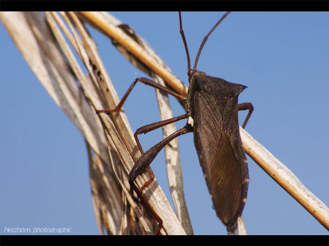 shield bug wanna reach the sky insect picture