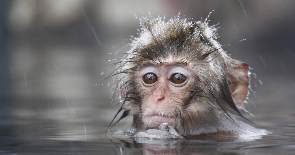 Free Cute Monkey Wallpapers Animals Zoo Park Baby Monkey Wallpapers Monkey Baby