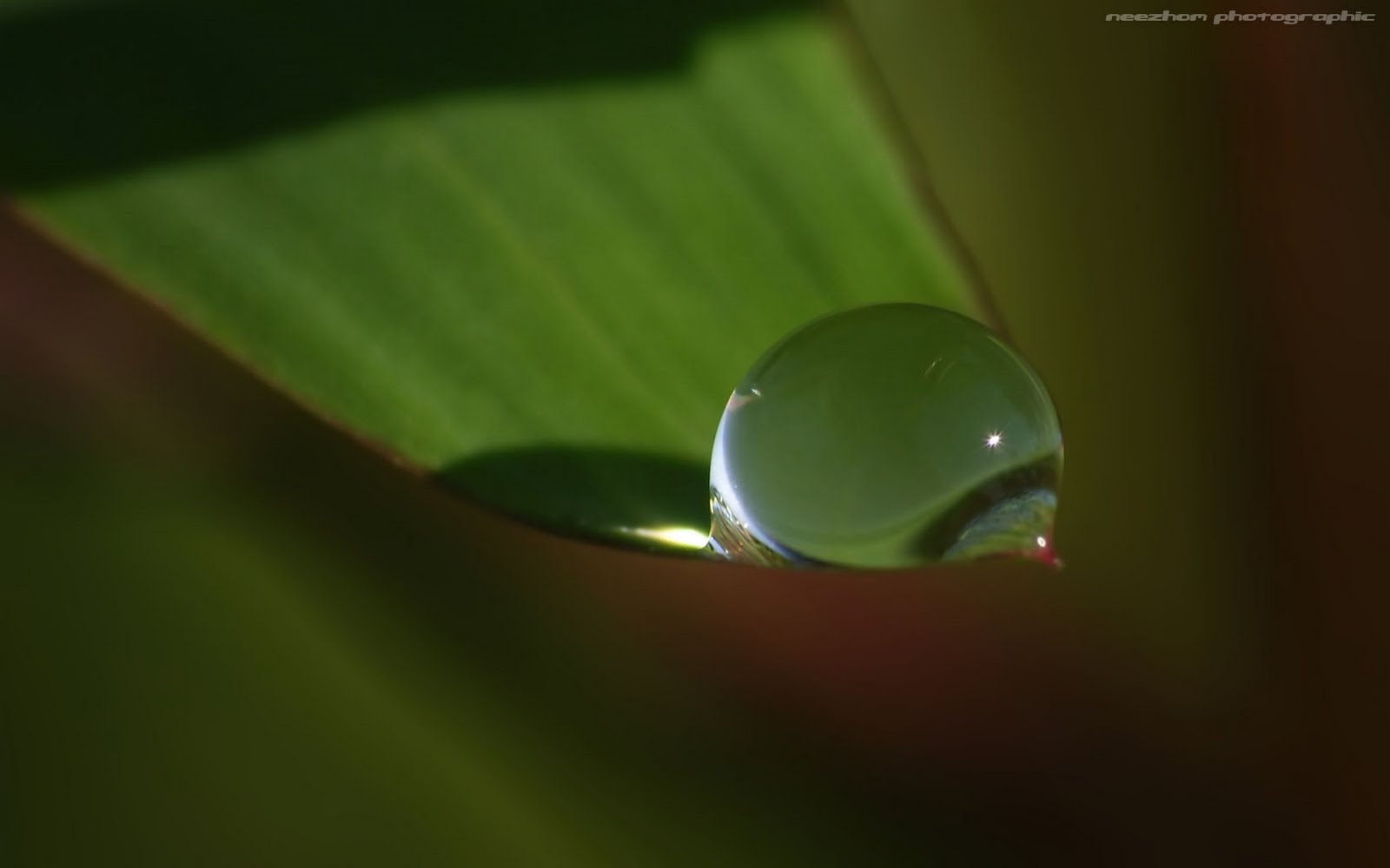 A leaf hold a dew drop, with caustic and sun sparkle