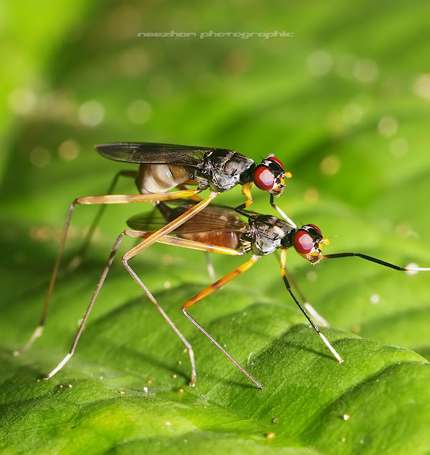 fly mating / make love
