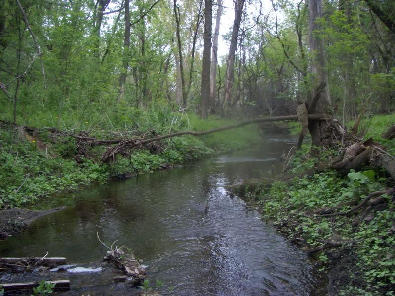 All Species Fishing Small Streams