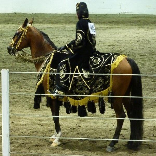 Blog and Pony Show: Region 5 Arabian Horse Show (costume ...