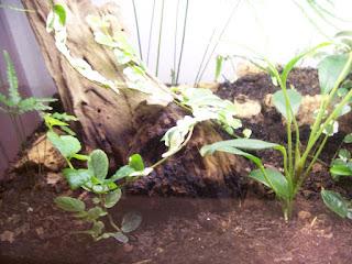 vivarium substrate