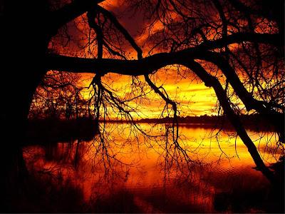 arbol-a-orillas-de-un-rio-ante-una-puesta-de-sol