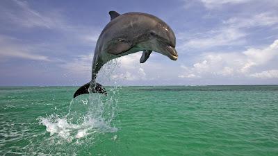 delfin-realizando-un-salto-en-mar-abierto