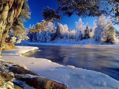 rio-entre-pinos-cubiertos-de-nieve