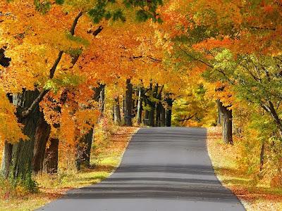 carretera-cubierta-por-ramas-de-arboles