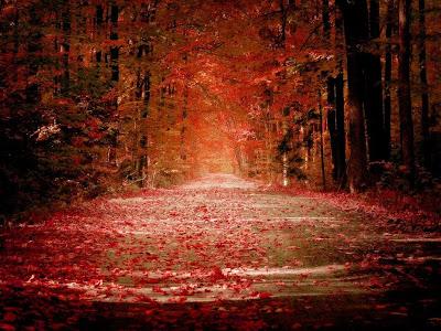 camino-entre-arboles-cubierto-de-hojas