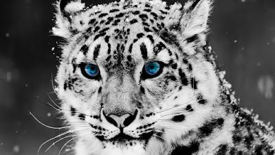 cabeza-de-leopardo