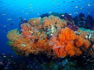 Semua tentang seputar wisata kepulauan raja ampat papua barat indonesia pulau mula sejarah mitos asal usul kekayaan cerita singkat pariwisata history of terbentuk