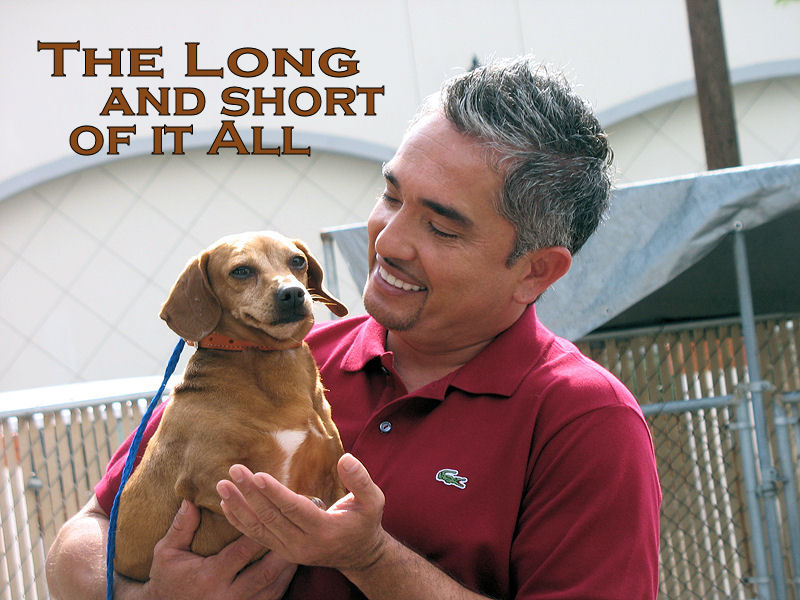 The Long and Short of it All: A Dachshund Dog News