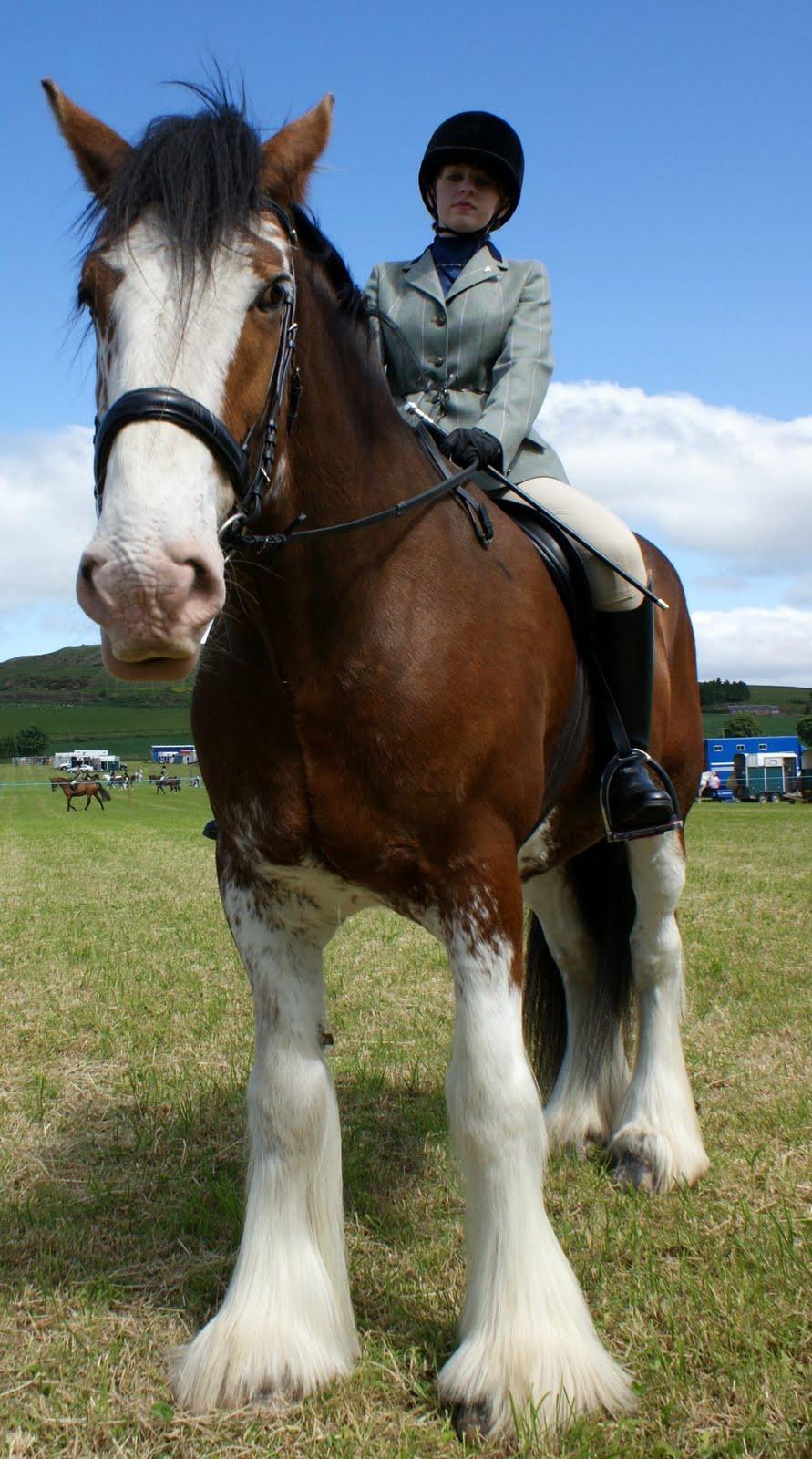 scotland photographs june  photograph clydesdale 891 x 1600 · jpeg